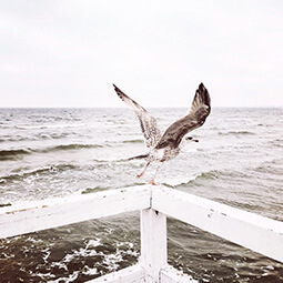 seagull sea baltic flying wings winter travel travelling UGC content